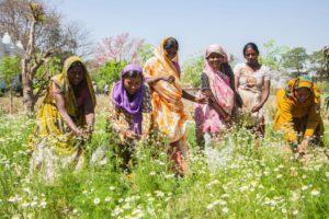 Organic India Sustainable Farming