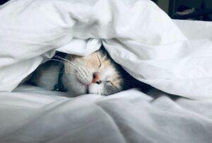 Quality Sleep